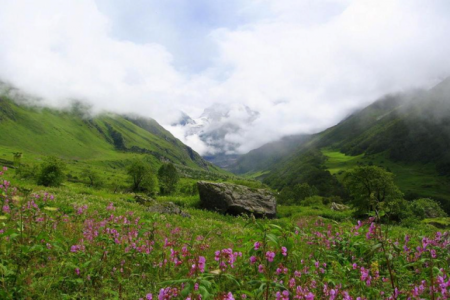 justwravel-Valley of Flowers