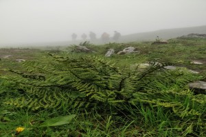 Misty trail during monsoon