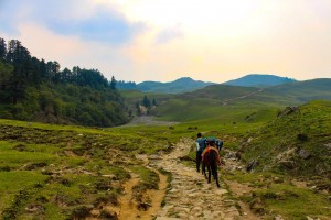 Trail going to Dayara Bugyal