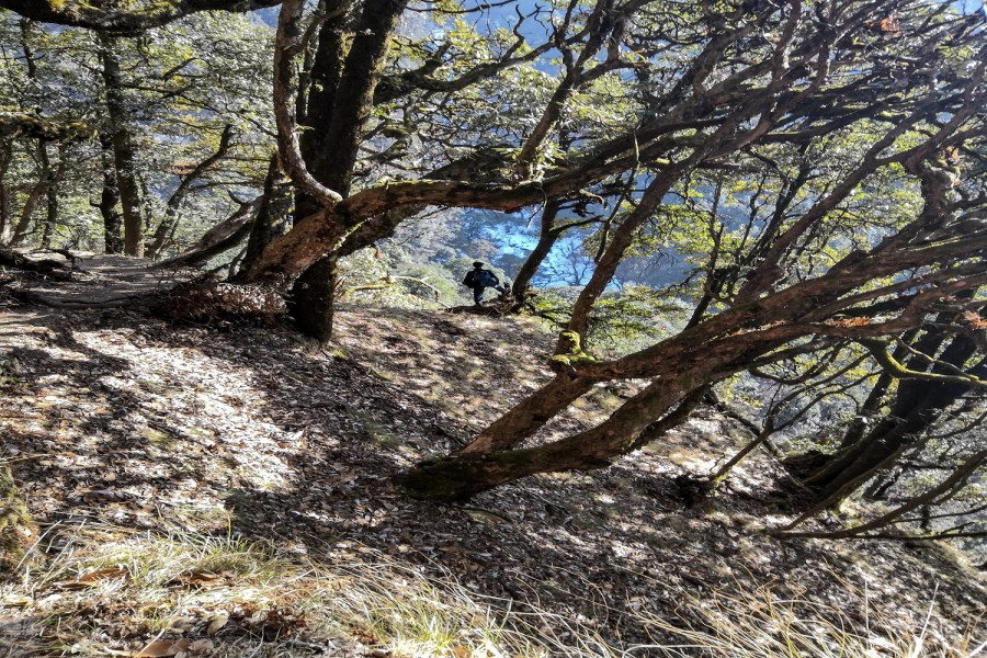 Trail from Deoriatal to Chopta